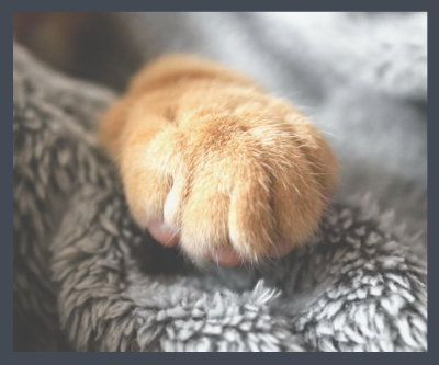 Paw Canvas Prints